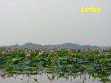 lotus7_convert_20100801225442.jpg