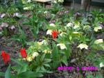 mother+s+garden_convert_20100421205041.jpg