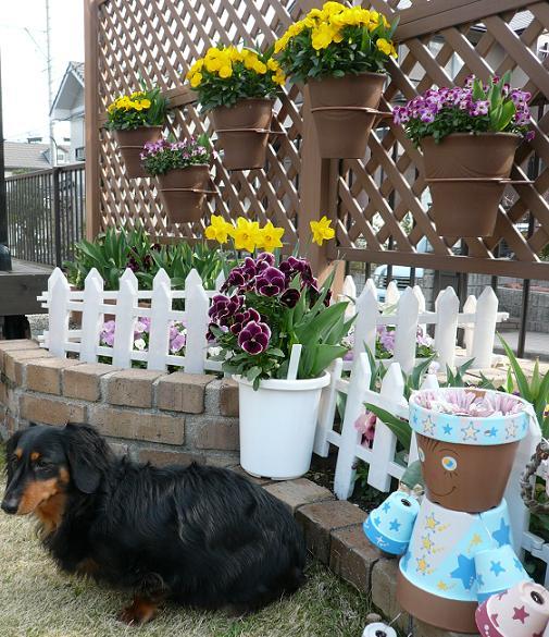 P1200014_チョコちゃんと花壇1