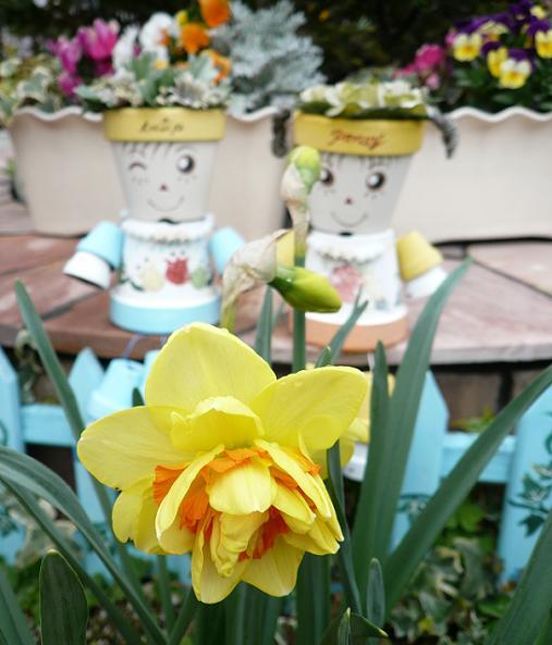 P1200150_ポスト前花壇のタヒチ1
