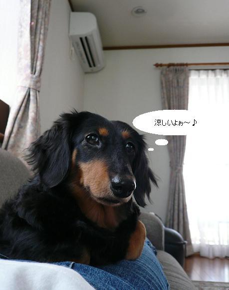 P1260949_チョコちゃん