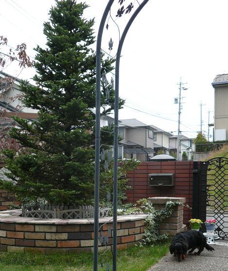 P1270055_tree.jpg