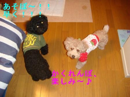 kakurennbo1_20100409223754.jpg