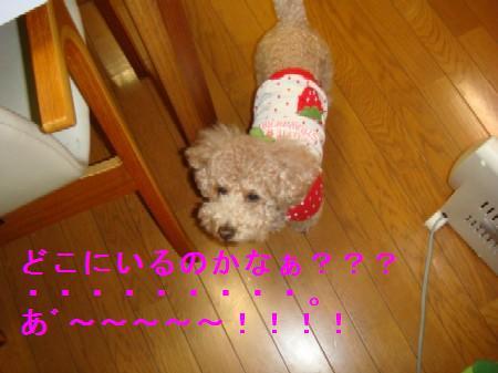kakurennbo3_20100409223753.jpg