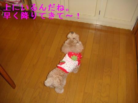 kakurennbo5_20100409223752.jpg