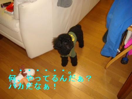 kakurennbo6_20100409223751.jpg