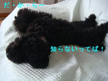 kashi4.jpg