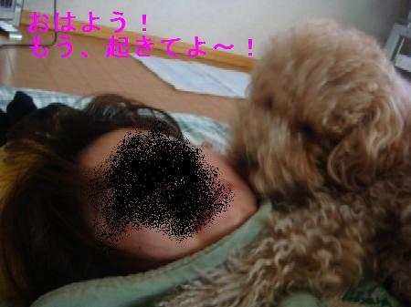 tyokomama4.jpg