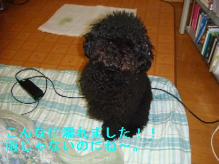 yuki2_20100315145735.jpg