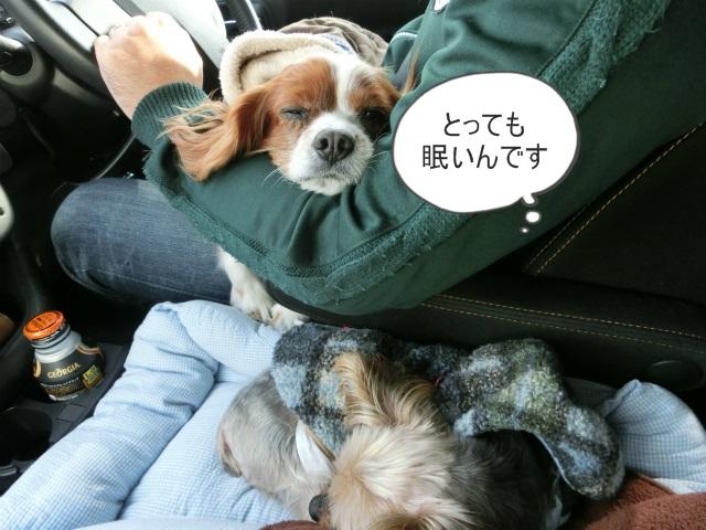 2014,1,14 遅めの初詣・ 013
