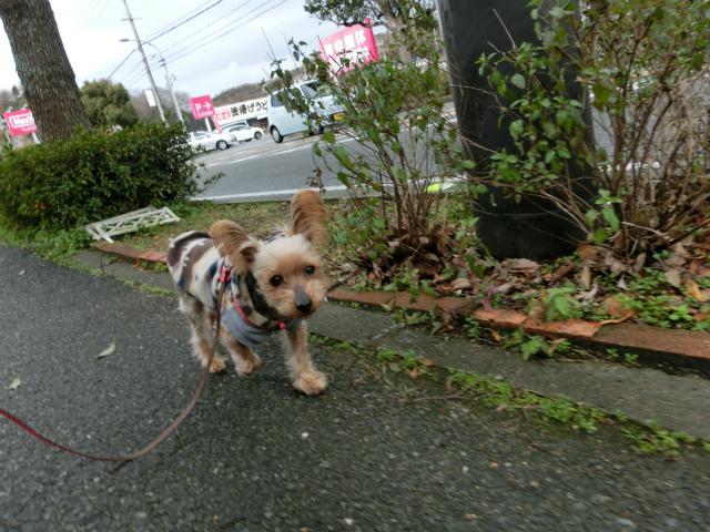 2014,1,26 瀬戸内海・牛窓の旅 015