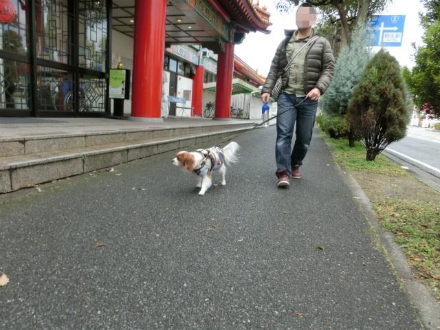 2014,1,26 瀬戸内海・牛窓の旅 018