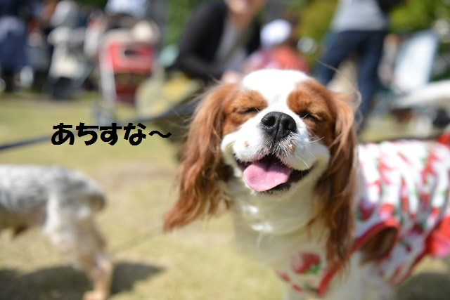 s-わんわんマルシェ 2014,09,28 004