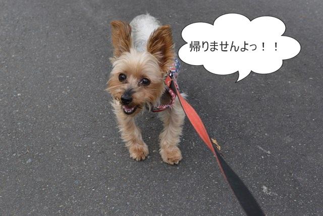 s-2014,10,12 清住コスモス畑 102
