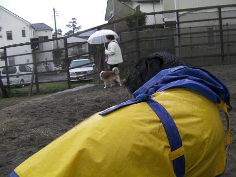 雨の日のお散歩3