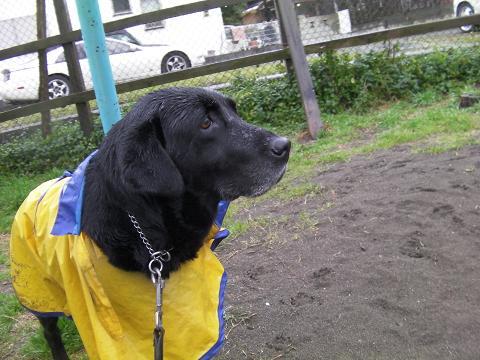 雨の日のお散歩2