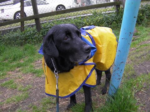 雨の日のお散歩1