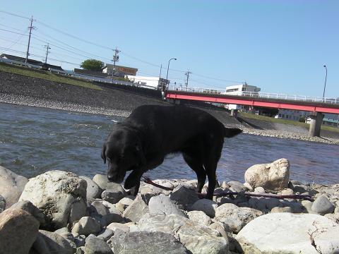 10天竜川.JPG