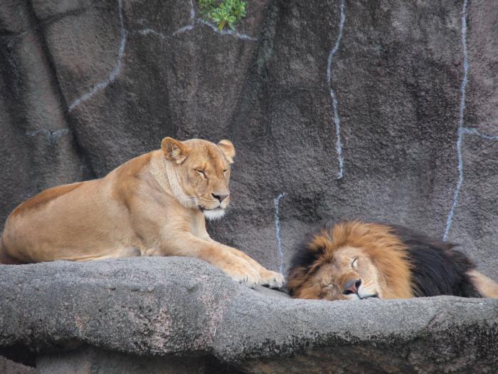 ちょっとした写真 <b>浜松市動物園</b>