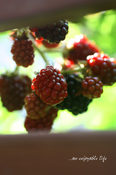 blackberry02.jpg