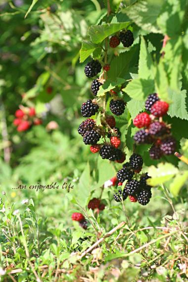 blackberry03.jpg
