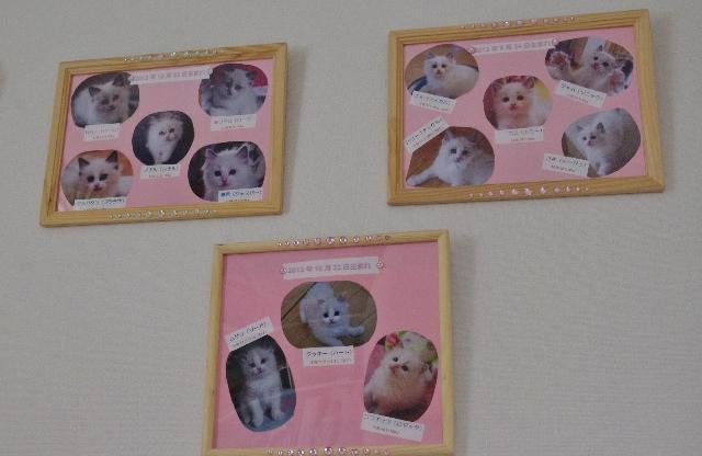 子猫達IMGP7243