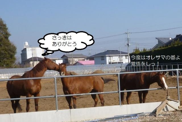 P1110668.jpg