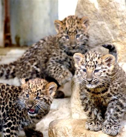 豹の赤ちゃん