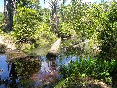 熱帯魚の生息地