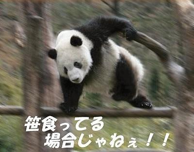 笹食ってる場合じゃねー パンダ