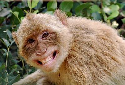 スマイル お猿さん