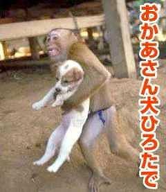 犬拾ってきたで サル