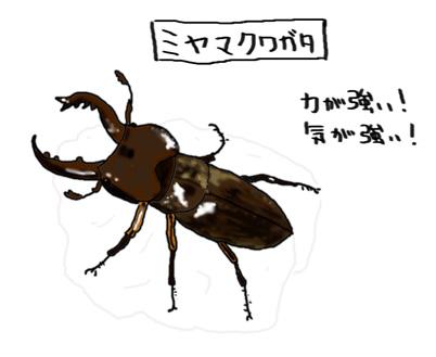 ミヤマクワガタ