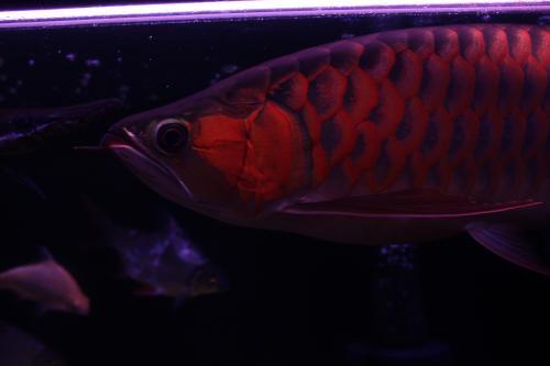 紅姫 2012.1.6 3