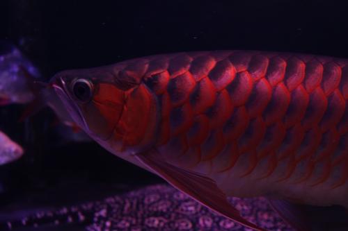 紅姫 2012.1.6 2