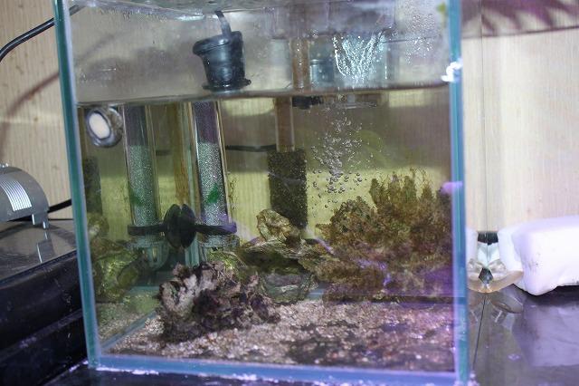 空いた 海水水槽
