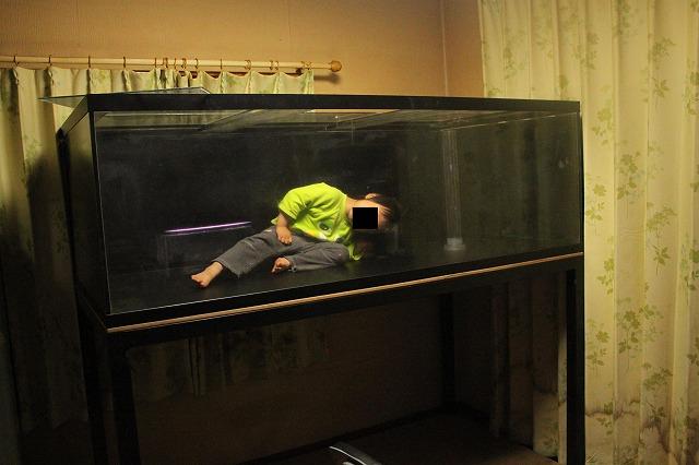 新水槽搬入した