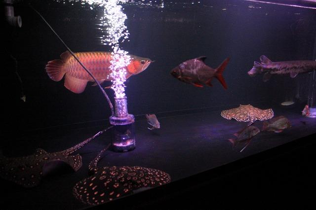 新水槽で泳ぐ魚達