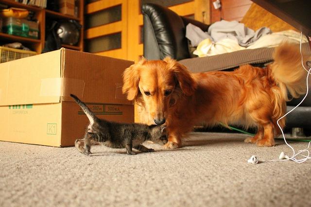 子猫 と チョッパー