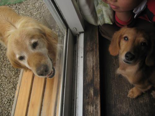 二匹の愛犬