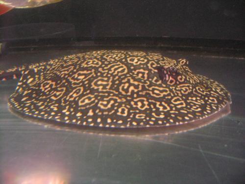 クロスジャガー 2011,11,9