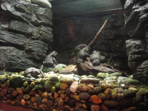カエルの集団