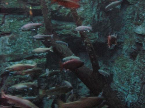 滝壺の下 群泳