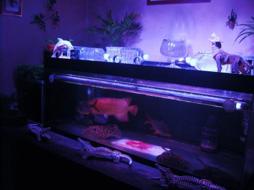 開放的で幻想的になった 黒須メイン水槽