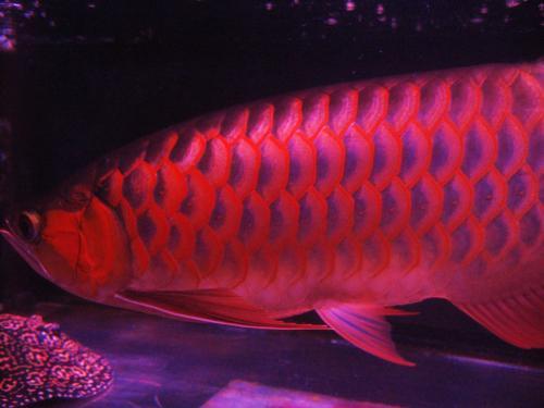 紅姫 2011 12 12
