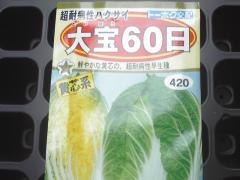 ハクサイ種2