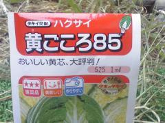 ハクサイ種1
