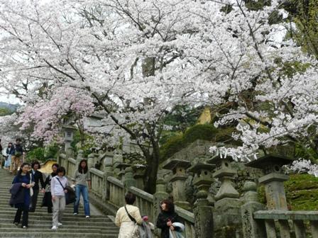 4月5日 階段、桜