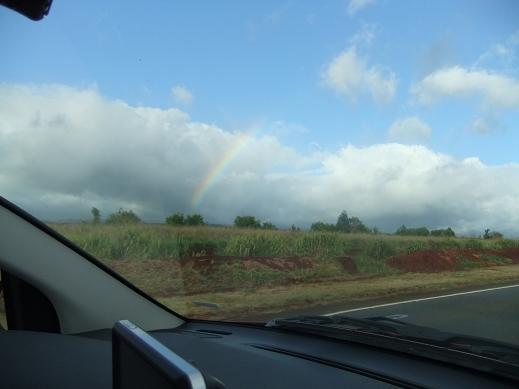 パイナップル畑と虹