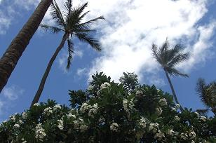 2010年6月ハワイ 景色1